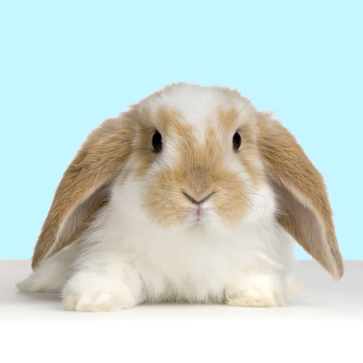 bunny pictures