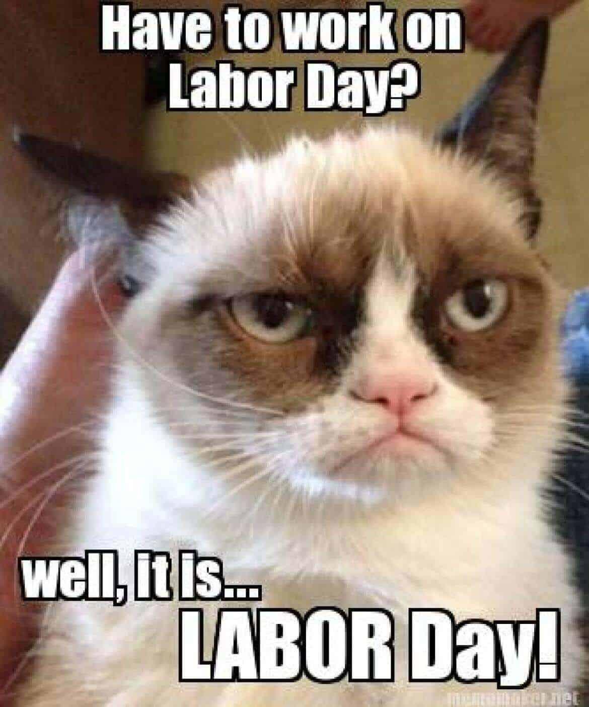labor day cat meme
