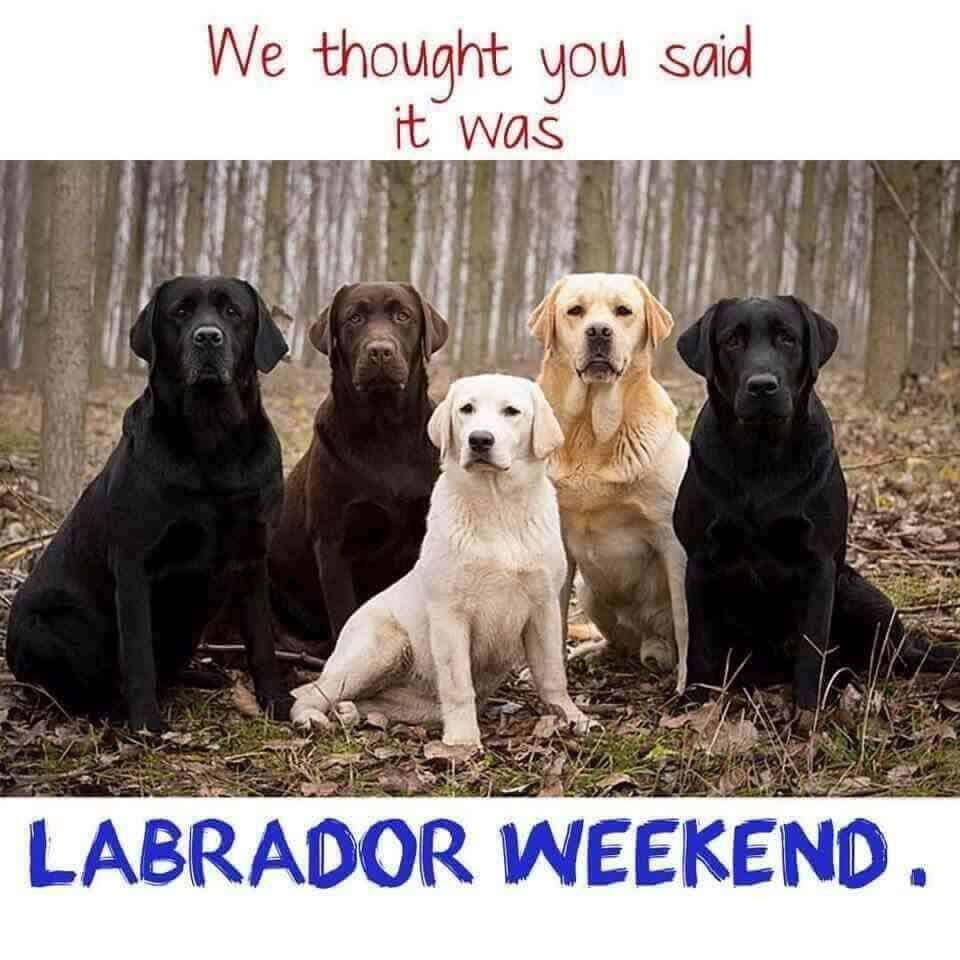 labor day memes with dogs